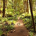 Trail Through The Rainforest by Carol Groenen
