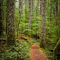 trail to Lower Lewis Falls by Mike Penney