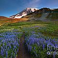 Trail To Majesty by Mike Dawson