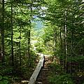 Trail To Sandy Stream Pond by Georgia Hamlin