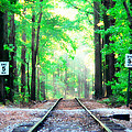 Train Tracks In Forest by Alice Gipson
