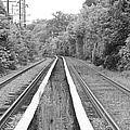 Train Tracks Running Through The Forest by John Telfer