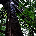 Train Trestle In The Woods by Michelle Calkins