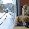 Tram In Winter by Mats Silvan