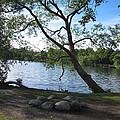 Tranquil Lake by Jill Mitchell