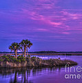 Tranquil Palms by Marvin Spates