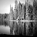 Tranquil Reflection In B And W by Joyce Dickens