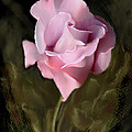 Tranquil Rose by Bonnie Willis
