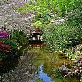 Tranquility Garden by Denise Mazzocco