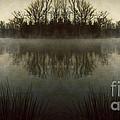 Tranquility Lake by Doug Sturgess
