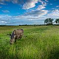Tranquility On The Plains by Andrew Matwijec