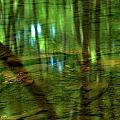 Translucent Forest Reflections by Adam Jewell