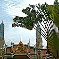 Traveler's Palm At Grand Palace Of Thailand In Bangkok by Ruth Hager