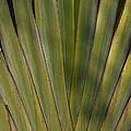 Traveller's Palm Patterns Dthb1542 by Gerry Gantt