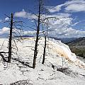 Travertine Terrace And Dead Trees by Christiane Schulze Art And Photography
