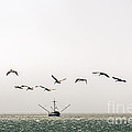 Trawler And Pelicans by Kate Brown