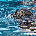 Treading Water V2 by Douglas Barnard
