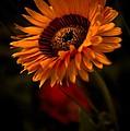 Treasure Flower by Venetta Archer