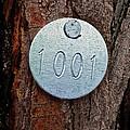Tree 1001 by Bill Owen