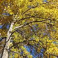 Tree 4 by Kimberly Maxwell Grantier