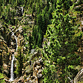 Tree Above Leavitt Falls  by Blake Richards