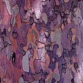 Tree Abstract by Rona Black