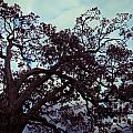 Tree Against Sky by Amy Cicconi