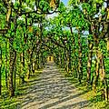 Tree Alley In Castle Park by M Bleichner