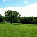 Tree Amidst Freshly Mowed Grass by Katie Beougher