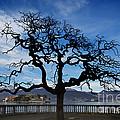 Tree And Borromee Islands by Mats Silvan