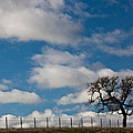 Tree And Fence On A Landscape, Santa by Panoramic Images