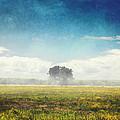 Tree And Meadow by Dirk Wuestenhagen