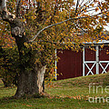 Tree And Red Barn by Luv Photography