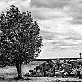Tree And Stone by Sheri Bartoszek