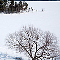 Tree And The Point In Winter by Rob Huntley