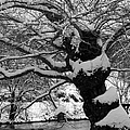Tree Art In Bw by Jennifer Robin