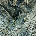 Tree Art by Nicole Doering