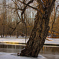 Tree At Collins Creek 2 by Jim Vance