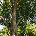 Tree At Msu by John McGraw