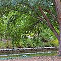 Tree At Norfolk Botanical Garden 4 by Jeelan Clark