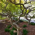 Tree At Norfolk Botanical Garden by Jeelan Clark