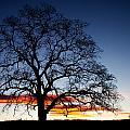 Tree At Sunrise by Robert Woodward