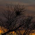 Tree At Sunset by Angus Hooper Iii