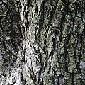 Tree Bark 2 by Nicole Berna