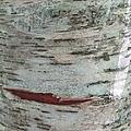 Tree Bark by Anita Adams
