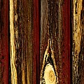 Tree Bark by Don Hammond