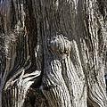 Tree Bark No. 3 by Lynn Palmer