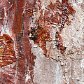 Tree Bark by Paul Cowan