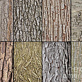 Tree Bark by Ronald Grogan