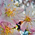 Tree Blossom by Nina Ficur Feenan